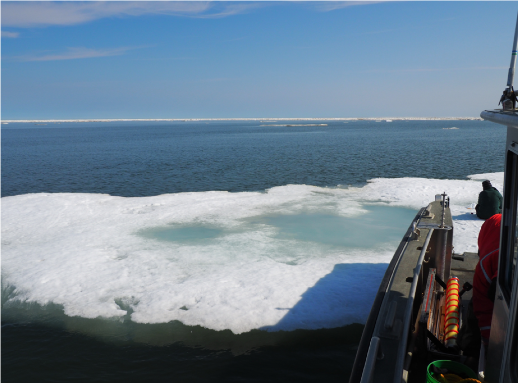 Sampling on a structurally rotten ice floe during July 2017 offshore sea ice sampling. PC: Dr. Karen Junge
